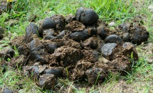 Whose dung is it anyway?