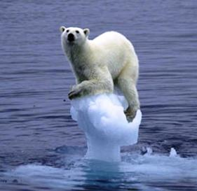 The global warming issue has more direct relevance from the perspective of a polar bear.